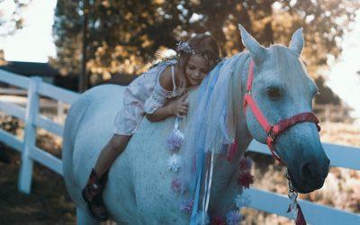Hesten og dens rytter – om kropp og hode